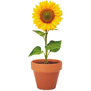 Plante Sunflower