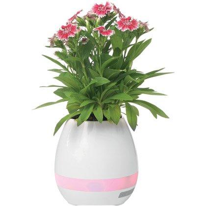 Kaiutin Vase, 5W